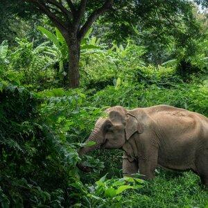 Stichting World Animal Protection afdeling Nederland image 3